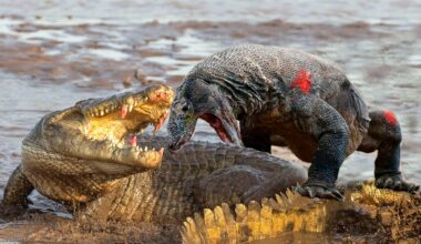 maxresdefault 6 Meet The World's 10 Most Dangerous Animals You Don't Know