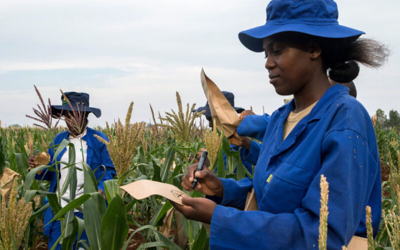 https://www.afp.com/en/news/2265/drought-hit-zimbabwe-farmers-look-science-save-crops
